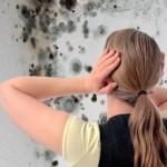 Як боротися з цвіллю на стінах в квартирі
