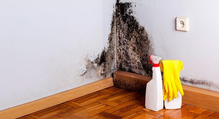 Как убрать плесень со стены в квартире