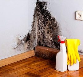 Як прибрати цвіль зі стіни в квартирі