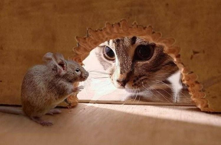как поймать мышей в квартире