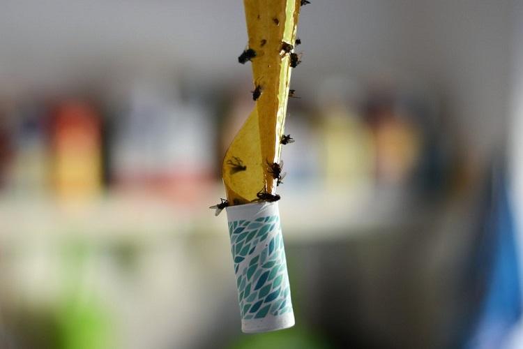 липучка от мух