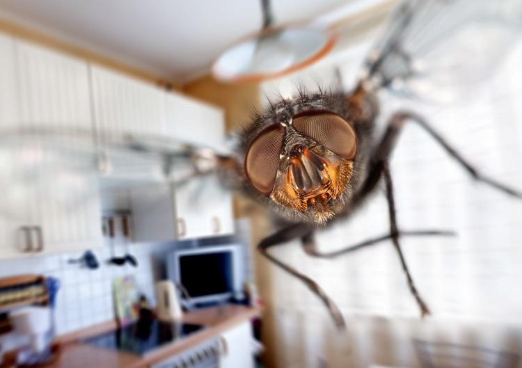 Як позбутися від мух в квартирі
