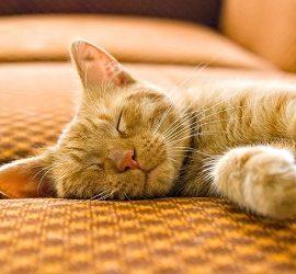 Как убрать запах кошачьей мочи с дивана