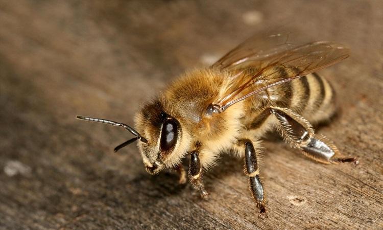 Як позбутися від бджіл в приватному будинку