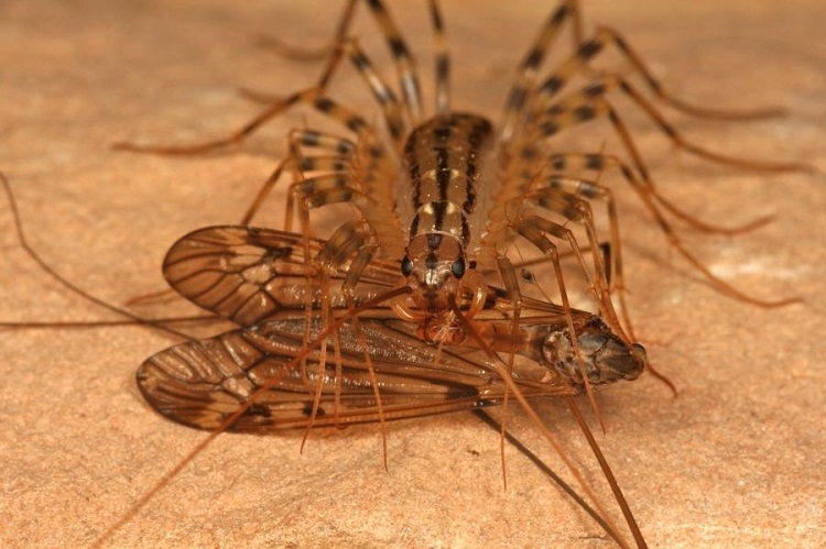 как вывести мухоловок