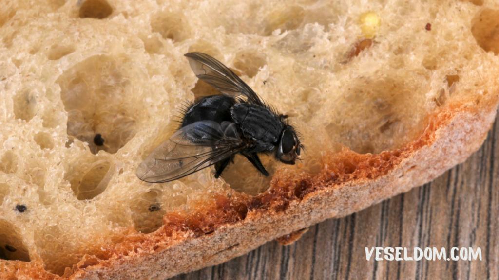 Чому мухи кусаються восени