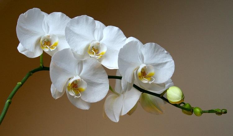 Як пересаджувати орхідею в домашніх умовах