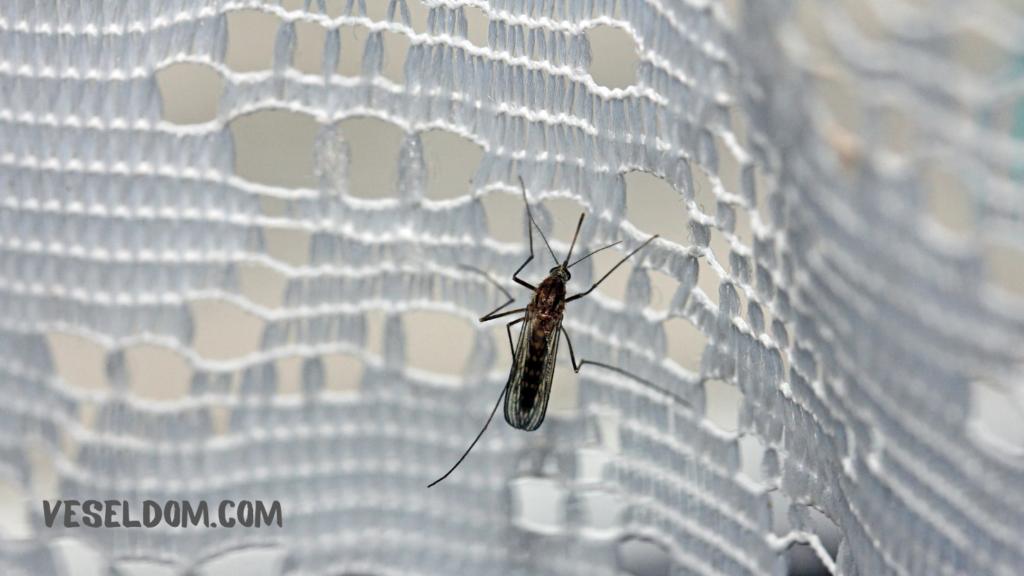 Скільки живуть комарі в квартирі